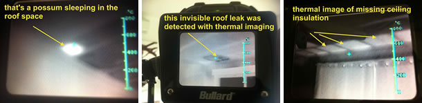Thermal Imaging Scan